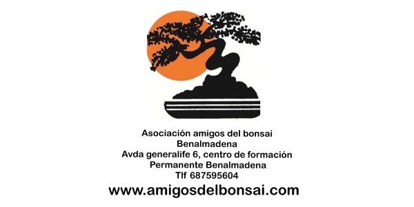 amigos del bonsai