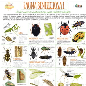Taller-fauna-beneficiosa